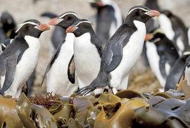 Nový Zéland, turistický ráj na druhé straně planety: Soukromá audience v království tučňáků