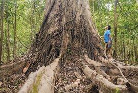Zelený ráj jménem Brazílie aneb Za přírodním bohatstvím a krásou pátého největšího…