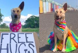 Sedmnáckrát střelená slepá fenka bez ucha se stala terapeutickým psem a hvězdou sociálních sítí
