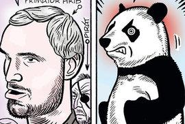 Zelený Raoul: Není panda jako panda! Co se skrývá pod kůží roztomilého pražského medvídka?
