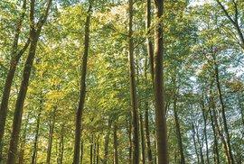 Zdejší podzimní lesy jsou balzám na duši