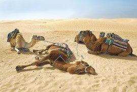"""Městu Douz se nepřezdívá """"brána Sahary"""" pro nic za nic: za posledními domy se táhne moře písku"""