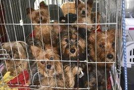 Boj proti množírnám psů: Pravidla pro chov se mají zpřísnit, čipování štěňat bude povinné, rozhodli poslanci
