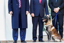 Americký prezident Donald Trump v Bílém domě přivítal neobvyklého hosta - služebního psa americké armády, který pomohl dopadnout vůdce Islámského státu abú Bakra Bagdádího