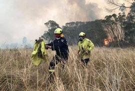 Záchrana koalů před požáry v Austrálii.