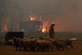 Austrálii dál sužují rozsáhlé požáry, (29.12.2019).