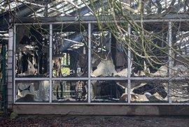 Pavilon opic v zoo v německém Krefeldu lehl popelem.