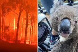 Australské požáry decimují populace zvířat. Zděšení klokani prchají, ale koaly…