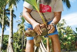 Rozbíjení kokosů vyžaduje grif a trochu hrubé síly