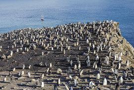 Vítejte v ráji tučňáků