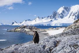 Cuvervillův ostrov: za slunečného počasí jsem se vyškrábal na vyvýšené místo s krásným výhledem na Gerlachovskou úžinu v domnění, že budu chvilku sám. Společnost mi ale znenadání přišel dělat tučňák oslí.