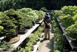 Netradiční vesnička Bonsai Mura v japonském městě Ómija: Osvěžující zastávka v bonsajovém ráji