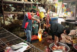 Na tržišti v číském městě Wuchanu, kde pandemie začala, se běžně vyskutuje mnoho zvířat, včetně luskounů a toulavých psů .