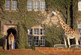 Luxusní hotel Giraffe Manor