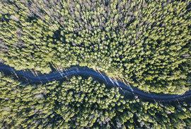 Kilometry a kilometry lesů...