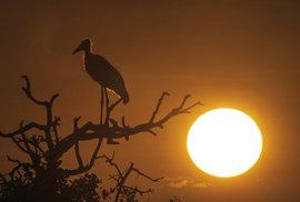 V zemi medojedů aneb Pokud chcete zažít dokonalé safari, vydejte se do Botswany