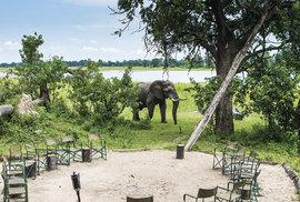 Botswanské safari kempy nejsou ohrazené a sloni jsou zde běžnými návštěvníky