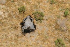 V Botswaně za poslední měsíce uhynulo více než 350 slonů. Příčina je nejasná