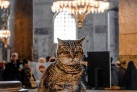 Tvář Hagia Sofia, kterou neznáte: slavný chrám jako kočičí domov