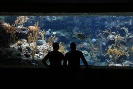 Zbrusu novým turistickým lákadlem Karlovace je sladkovodní akvárium Aquatika, složené z pětadvaceti bazénů.