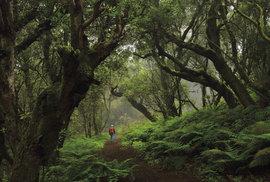 El Hierro: Nejmenší ostrov kanárského souostroví se snaží jít příkladem v ochraně přírody