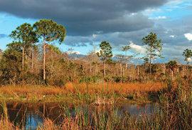 Florida není jen slunce a pláže. Je to také eldorádo pro všechny fotografy a milovníky opeřenců
