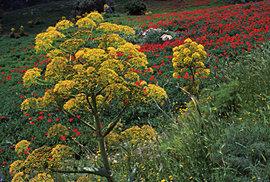 Exploze barev a vůní: Probouzející se příroda odhaluje kouzelnou tvář Kykladských…