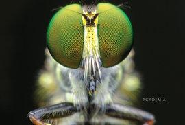 Ohroženi hmyzem? Zatím ne, ale počkejte na opravdové jaro. Mšice, vši, krtonožky a…