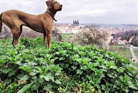 Co napadá Ondřeje Kobzu: Pohled na město přes báječné kopřivy