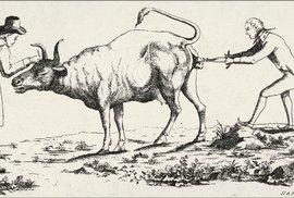 Na počátku byla kráva. Od prvního očkování uplynulo 225 let, objevitel okouzlil i …