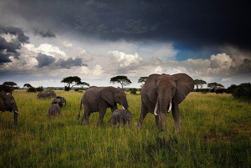 Sloni rozumí lidské řeči