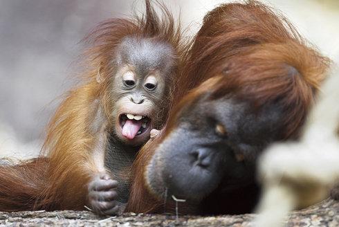 Nejvzácnější mláďata: Zoologické zahrady nejsou jen přehlídka zvířat