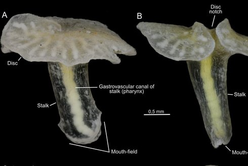 Tajemná dendrograma: Záhadný tvor v lihu