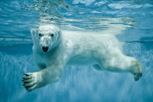 Život ledních medvědů okem skryté kamery