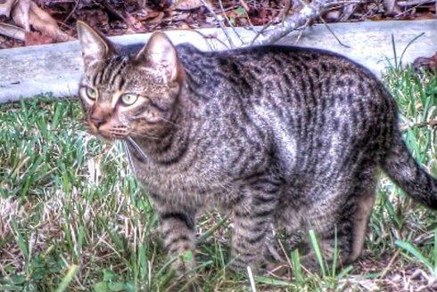Šelmy, které milujeme: Kočky ne úplně domácí