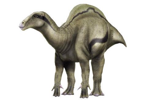 Zvláštní objev: Plachtící dinosaurus
