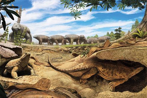 Odhalená záhada: Proč má želva krunýř?