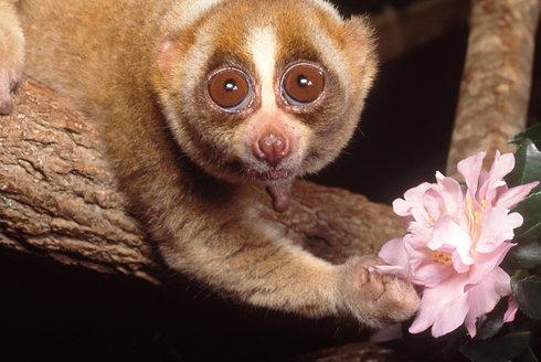 Drink pro opičky: Od koho se lidé naučili pít?