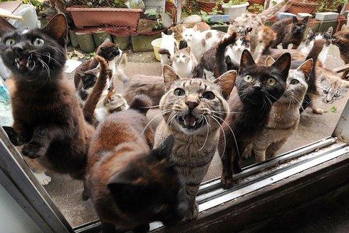 zdarma africký kočička pic