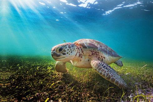 Želví tráva: Co roste na podmořské louce?