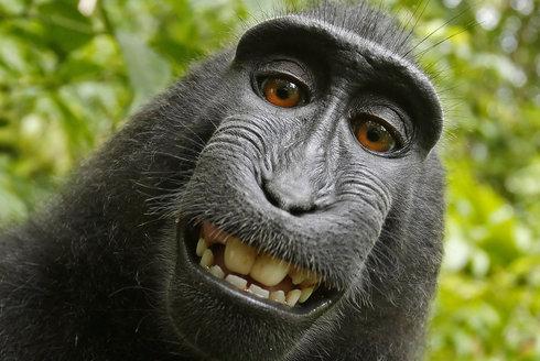 Mluvící opice: Poslechněte si skutečnou planetu opic