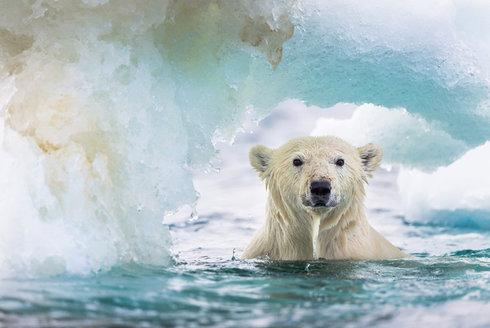 Lední medvěd potřebuje led