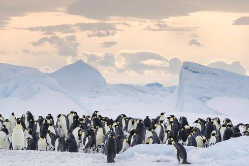 Putování tučňáků: Volání oceánu vás přenese do Antarktidy