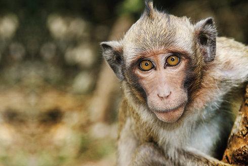 Tajemství řeči: Proč si nepopovídáme s opicí?