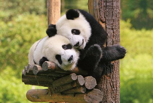 Pavilon pro pandy: Pražská zoo opět povyroste