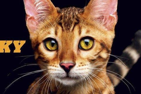 ABC 18/2017: Kočky a tajemství jejich původu