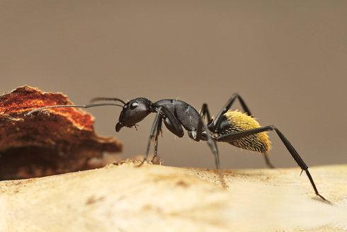 Návštěva u největšího mravence
