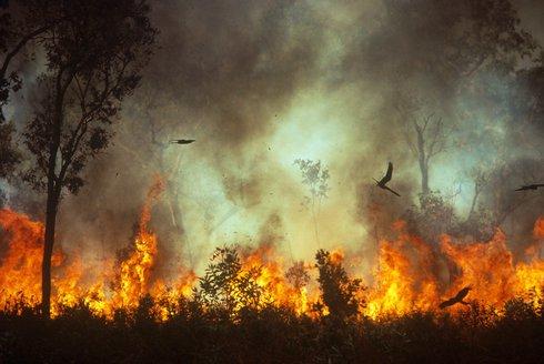 Opeření žháři: Dravci s ohněm v pařátech