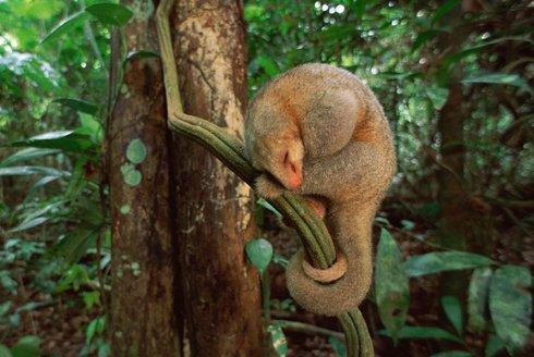 7 trpaslíků: Nové druhy mravenečníků