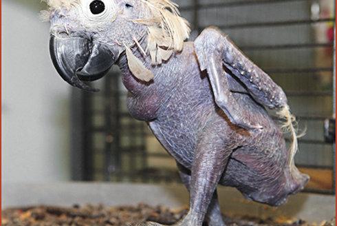 Ano, tohle je vážně papoušek